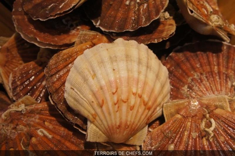 Conseils recettes chefs coquilles saint jacques - Cuisiner le corail des coquilles saint jacques ...