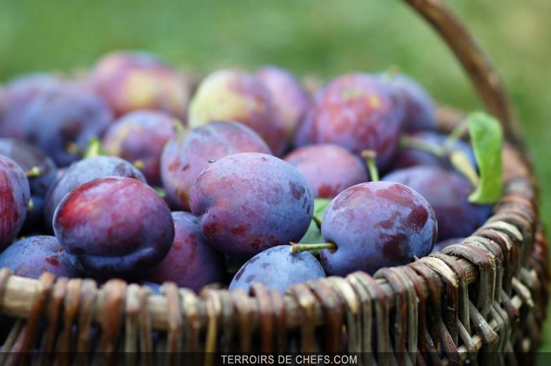 Fleurs,....fruit,.....tout ce qui se mange,...se boit....ou qui vient de la nature.......... - Page 4 Questche_zoom